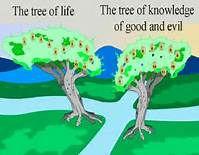 Freewill to Choose Tree of Life or Tree of Knowledge